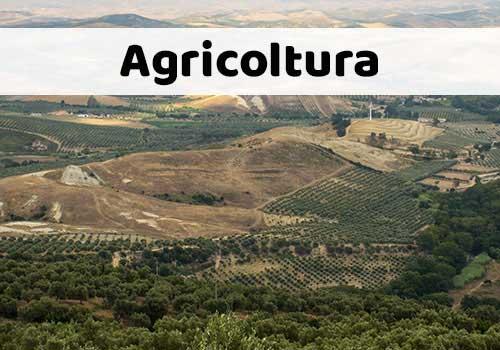 Agricoltura nella Calabria